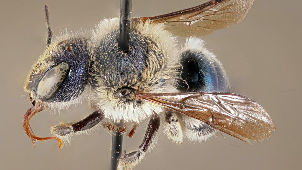 hogyan kezeljük a pikkelysömör méhekkel vörös viszkető foltok a bőrön
