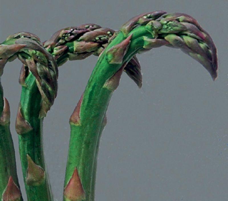 A bogyós termésű növények kártevői
