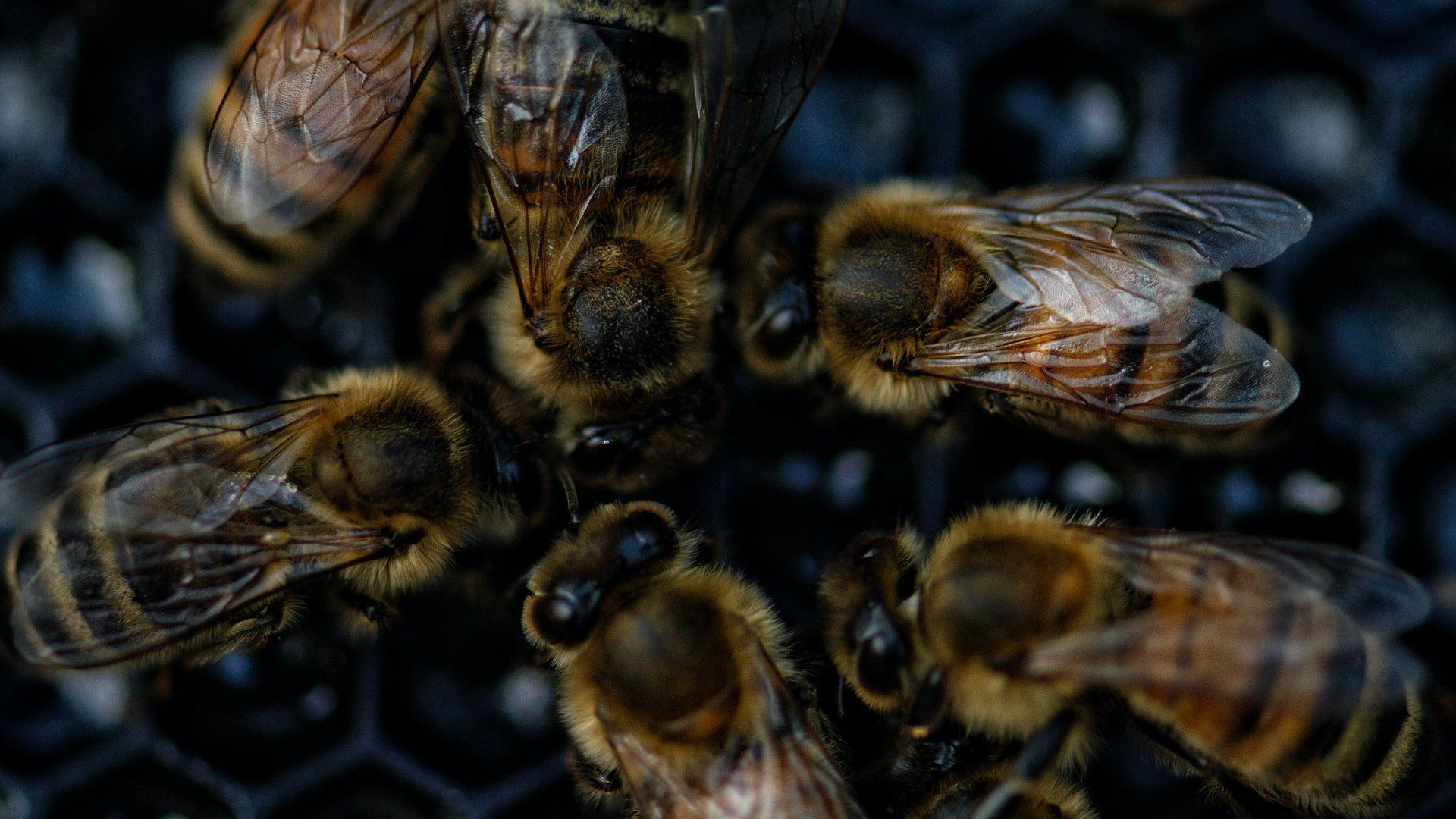 hogyan kezeljük a pikkelysömör méhekkel)