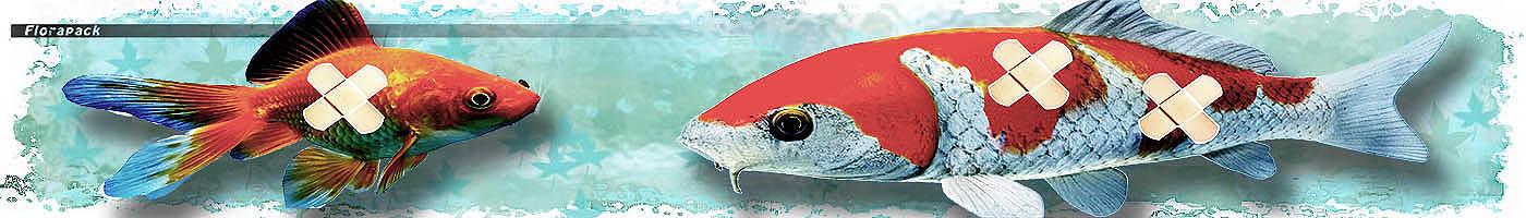 hal pikkelysömör kezelése thaiföldön