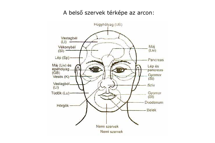 a gyomor és az arc foltosabb)