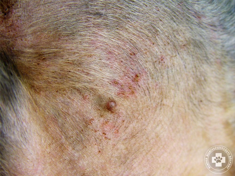 vörös foltok jelentek meg a fején, és a fénykép leválik)