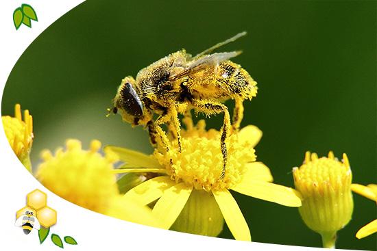 méhméreg kezelés pikkelysömörhöz pikkelysömör kezelése heptor