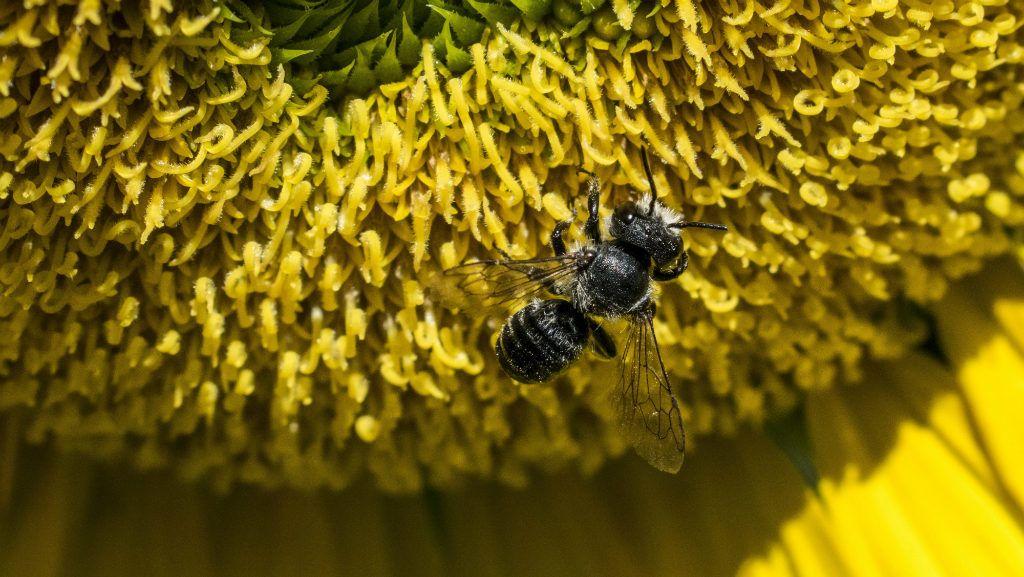 Először a növények halnak ki, aztán a méhek, végül minden más | hu
