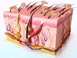 szeborreás dermatitis és pikkelysömör kezelése viszkető arc és fej vörös foltok