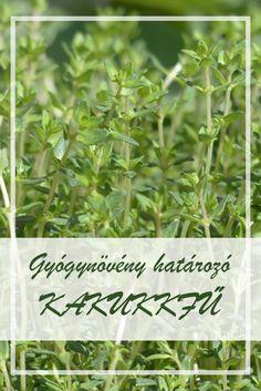 Györgytea Csalán (Urtica dioica) - Györgytea