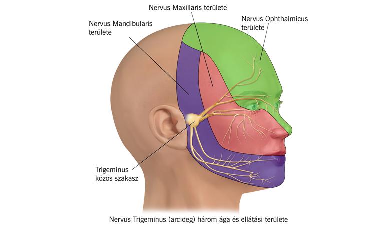 Hogyan lehet megszabadulni a fejfájás pikkelysömörétől: 6 módon - Bárányhimlő