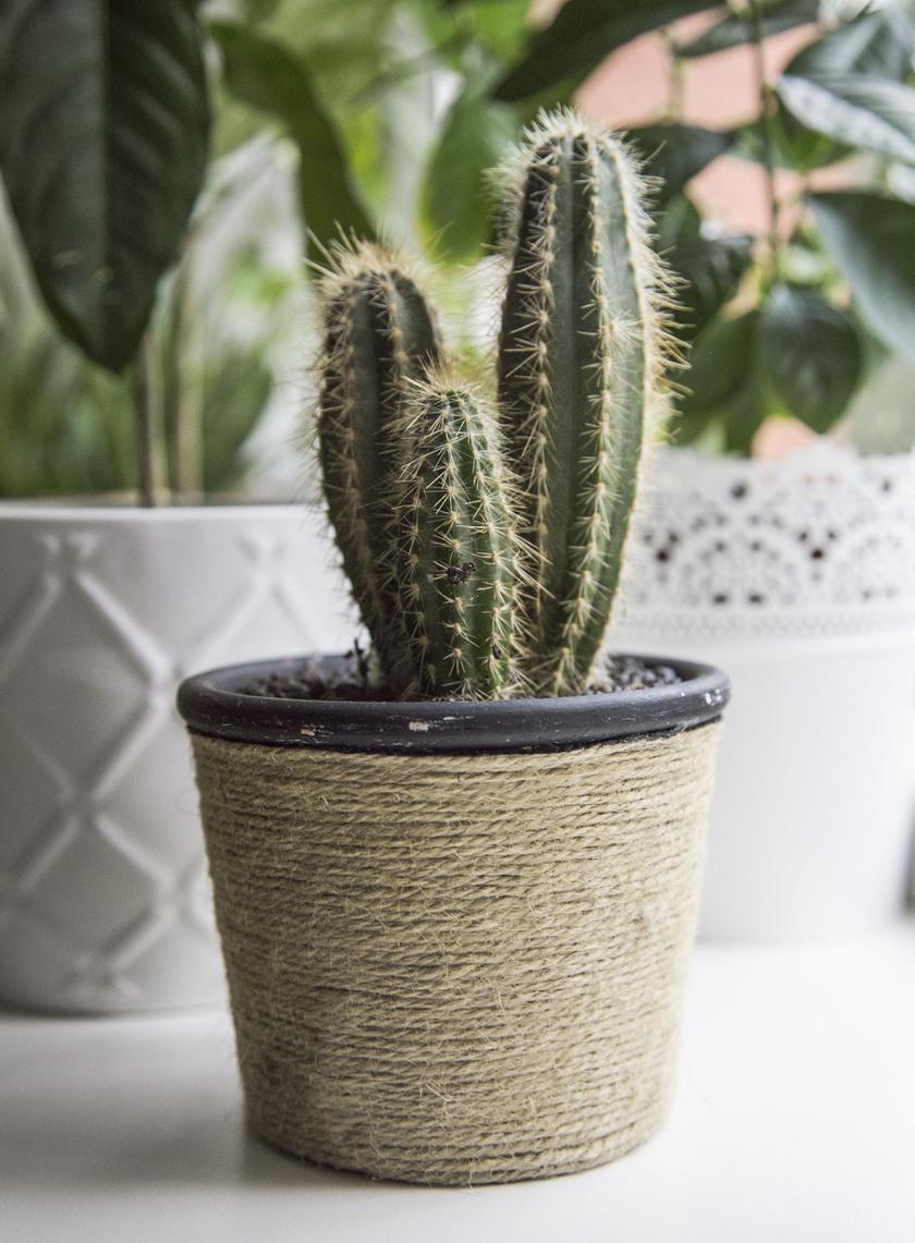 hogyan lehet gyógyítani a pikkelysömör kaktusz